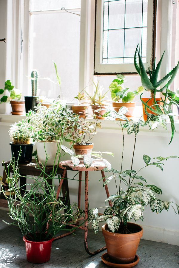 Potted plants in the window