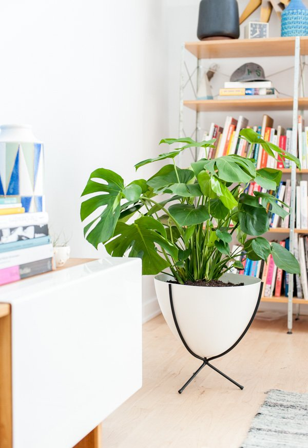 4 Tips for Finding the Perfect Plants  and Planters  for your Home. Planter Banter  4 Tips for Finding the Perfect Plants  and