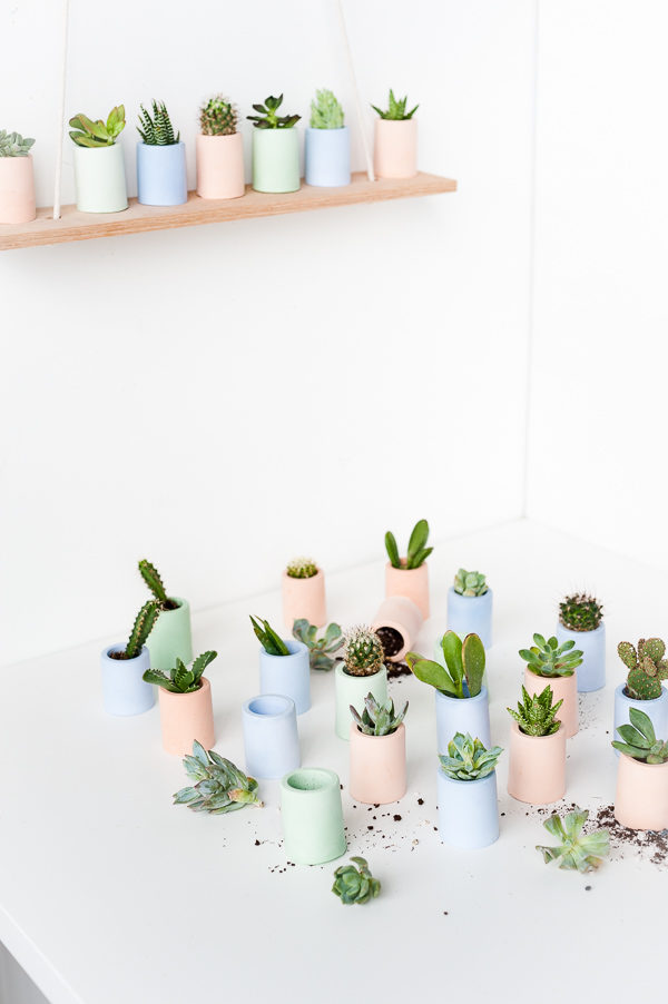 Planting succulents in tiny, pastel containers
