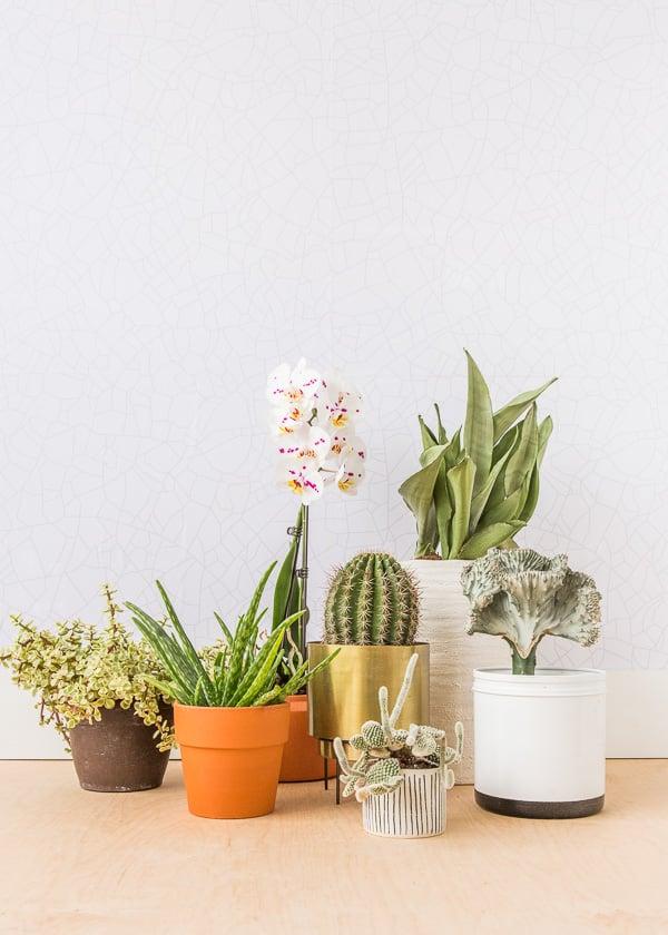 That plant life.