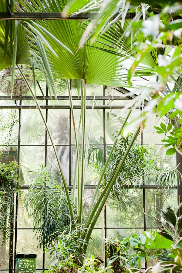 Greenhouse inspiration