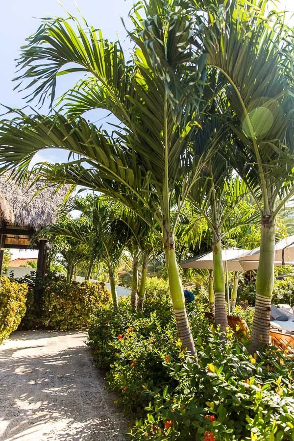 Where to Go and What to Do in Grenada