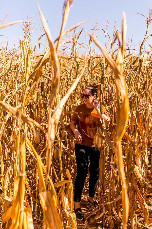 Jaemor Farms corn maze