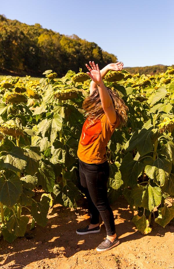 Running through sunflower fields