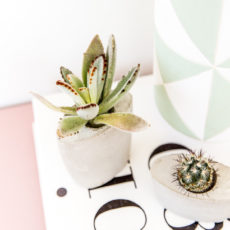 How to Make Concrete Planters with Recycled Materials for Earth Day
