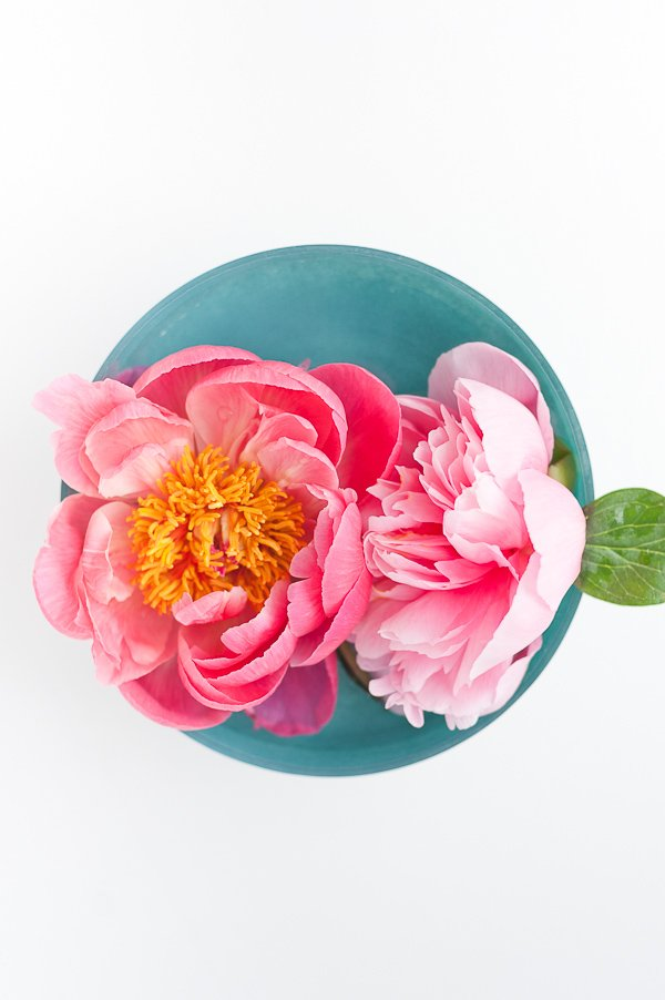 Coral and salmon pink peonies