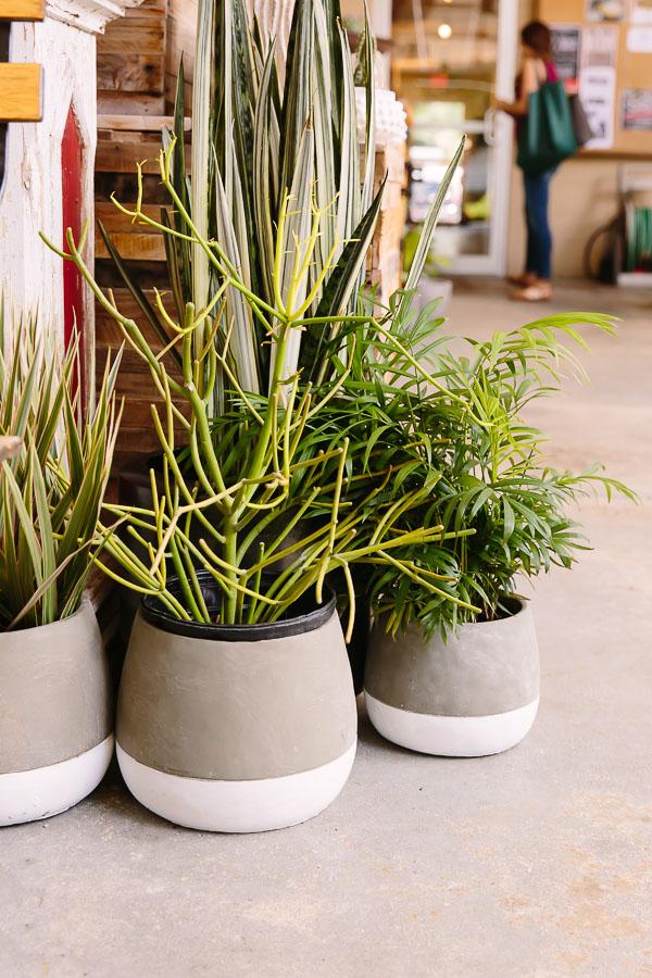 Paint dipped planters idea