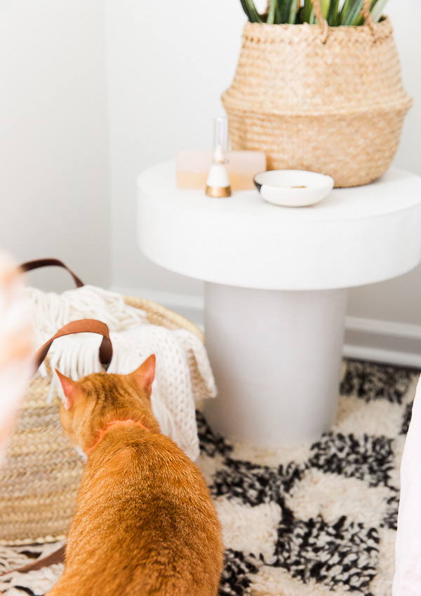 Photo bombing cat behind the scenes at an interiors shoot.