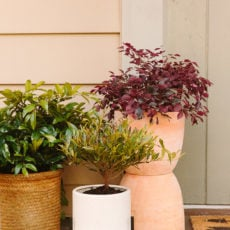 That Plant Life: Easy Spring Decorating for a Small Porch (with Plants) + DIY Totem Planters