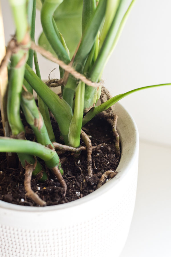 How to propagate plants in 3 easy steps. Who knew it was so simple to get new plants from ones you already have in your home? #houseplant #propagation #plants #philodendron
