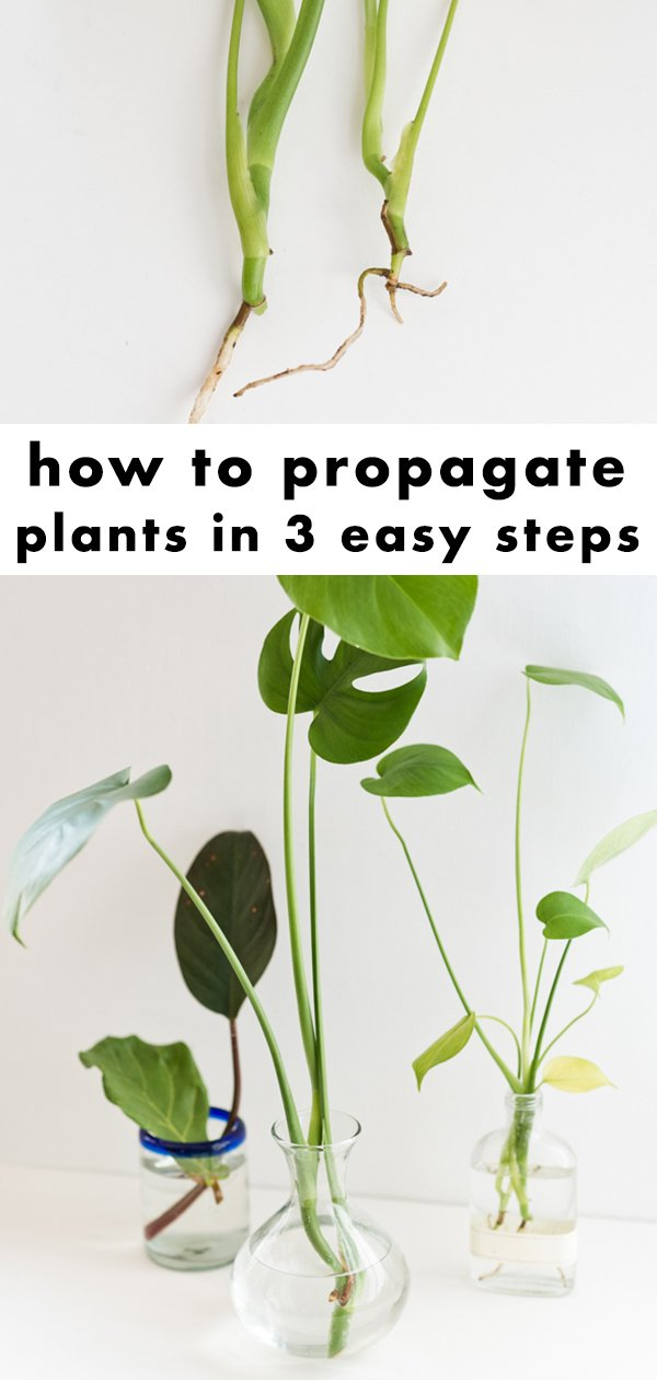 Learn how to propagate plants in three easy steps. So easy! #plants