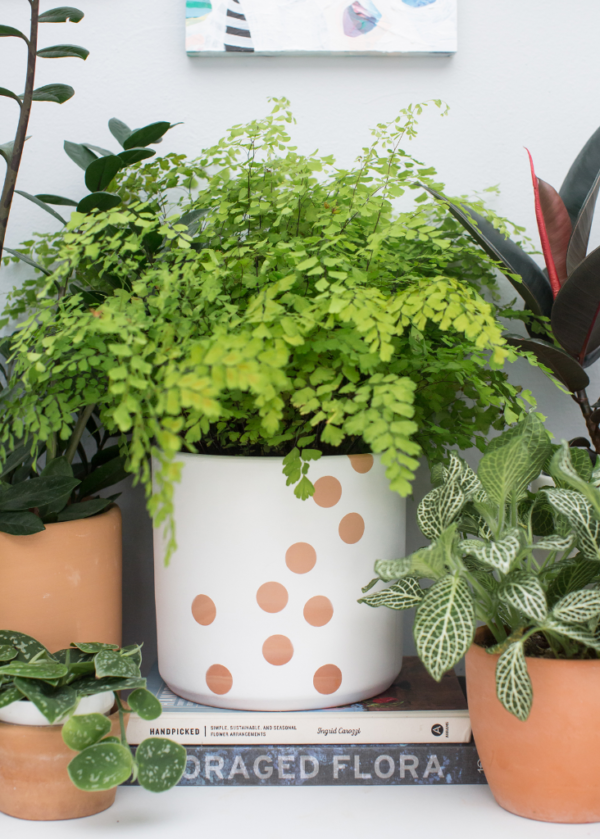 DIY Planter Ideas: Keep it simple, with a polka dot planter with some personality from Oh Joy.