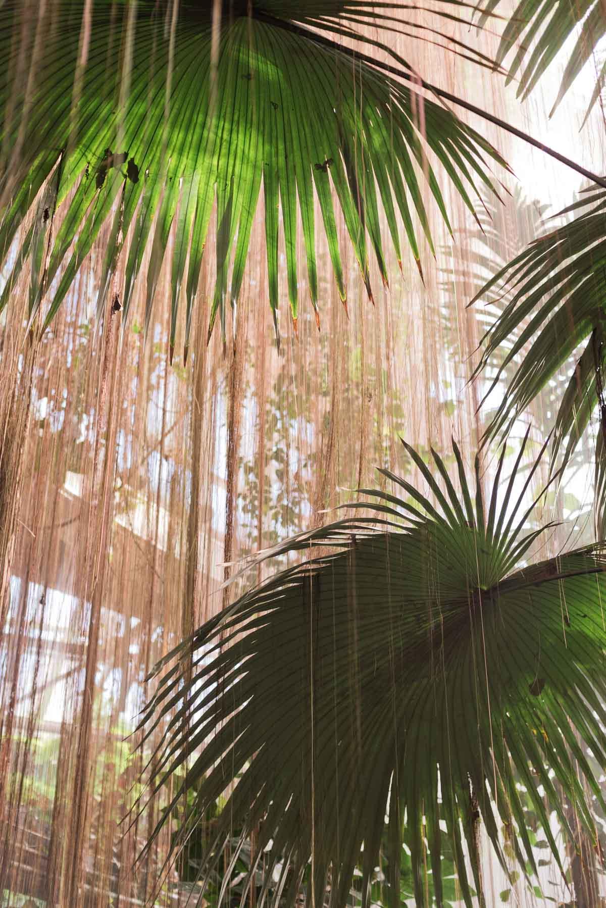 5 Unique Date Ideas That You Might Not Have Thought to Try. Idea #1: Botanical Gardens #dateideas #uniquedate #botanicalgarden #tropical #plants