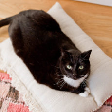 A DIY Cat Bed that Cost Less than $8 to Make! Did I Mention it's Actually Cute Too?