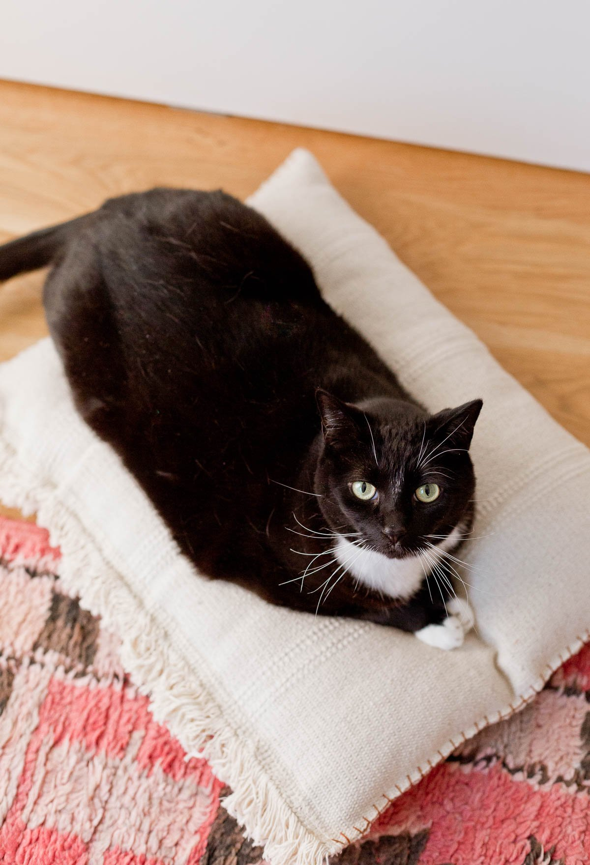 This neutral (and cute) DIY cat bed that cost less than $8 to make and takes less than an hour. #catbed #diy #pets #tuxedocat
