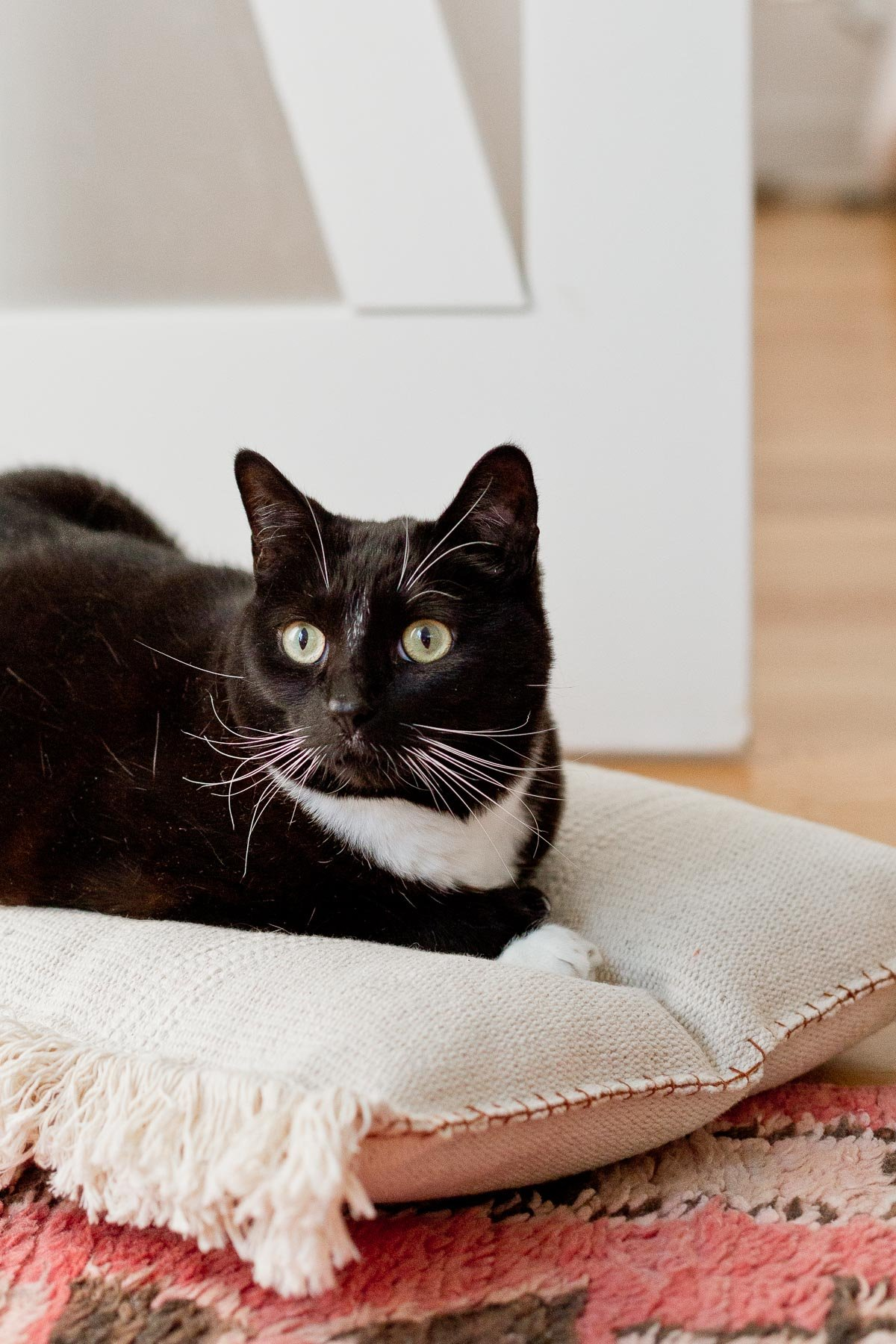 This neutral (and cute) DIY cat bed that cost less than $8 to make and takes less than an hour.